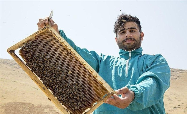 روایتی از جوان کارآفرینی که از ۱۰ کندوی عسل به ۶۰۰ کندو رسید