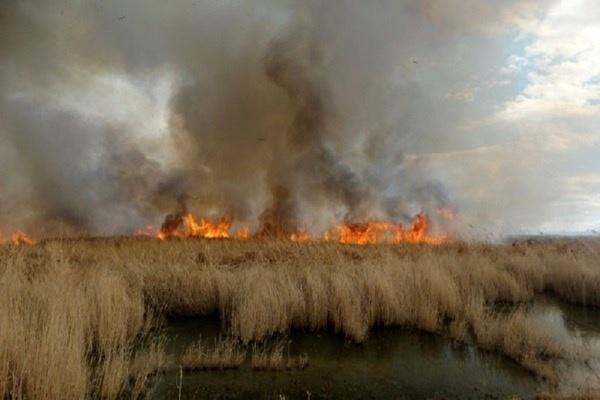 آتش سوزی هورالعظیم فاجعه بزرگ زیست محیطی/ تالابی که همچنان با بی تدبیری میسوزد