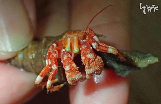 موجودات عجیب دریایی که گویا از سیاره ای دیگر به زمین آمدهاند!+تصاویر
