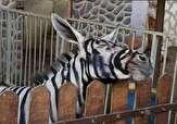 باشگاه خبرنگاران -باغ وحش مصر الاغ رنگ شده را گورخر جا زد!+ عکس