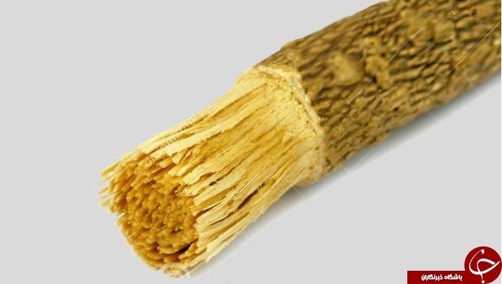 :)معرفی چوب مسواک + طریقه مصرف و فواید / نوع مسواکی که در منابع روایی بر آن تأکید شده، چه نوع مسواکی است؟:)
