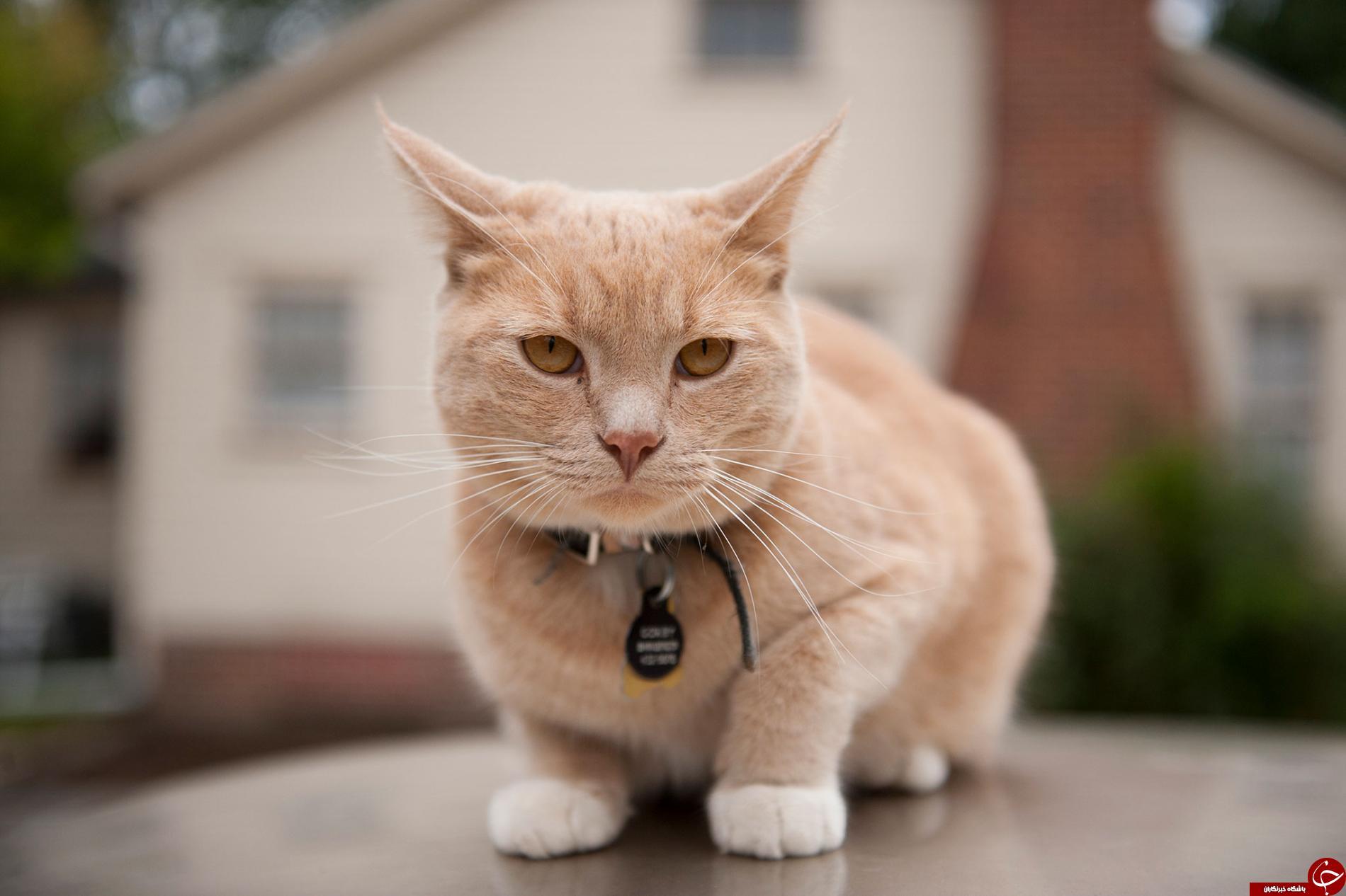 چرا گربه مدفوع خود را میخورد