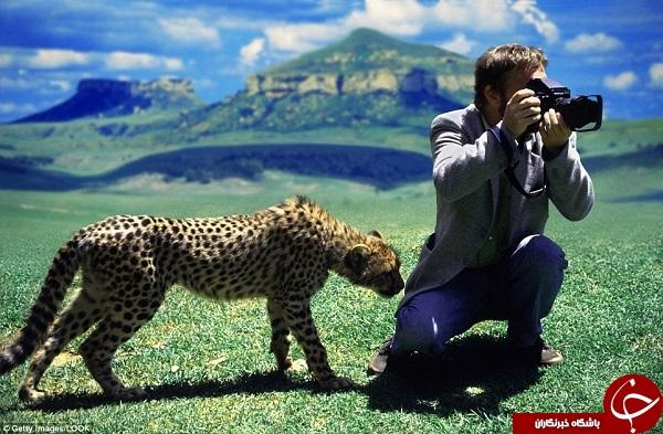 رفتار جالب حیوانات با عکاسان حیاتوحش +تصاویر