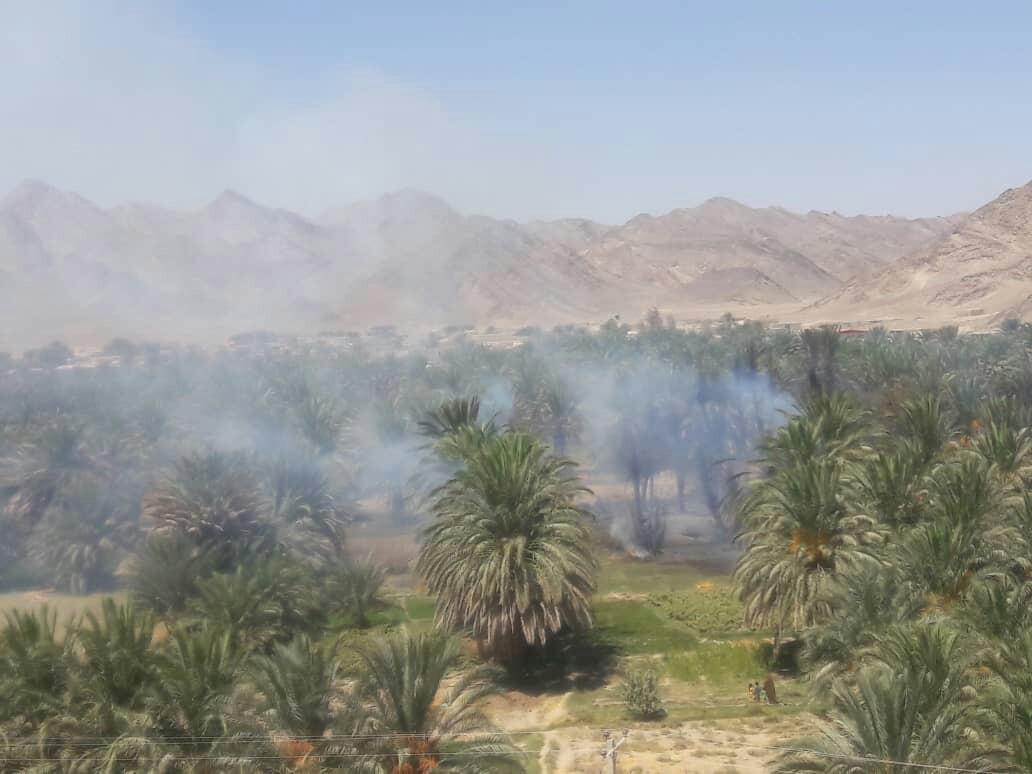 آتش در نخلستان های روستای سینوکان سراوان /۳۰۰اصله نخل در آتش سوخت