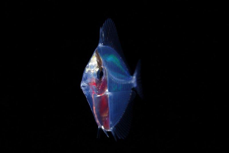 موجودات شگفت انگیز در اقیانوس که تا به حال ندیده اید+تصاویر