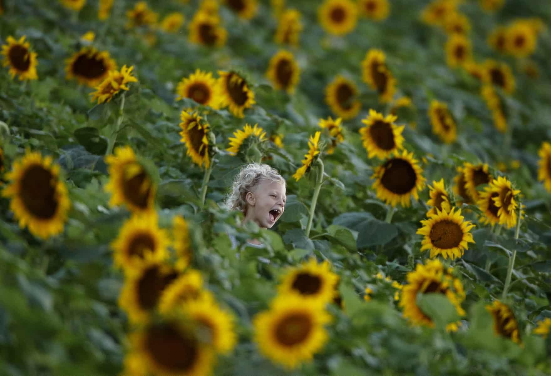 تصاویر روز: از چرت زدن بوریس جانسون در حین رقابتهای کریکت انگلیس و هند تا بزرگترین جشنواره بادبادکها در استرالیا
