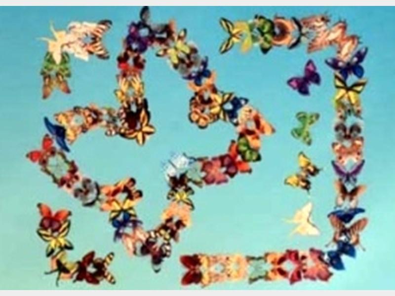 خداحافظی پروانهها تا پروازی دوباره به دیار نصف جهان