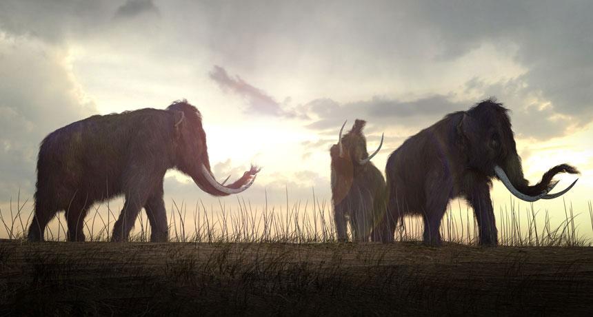 پوکی استخوان دلیل انقراض بزرگترین حیوان عصر یخبندان + تصاویر