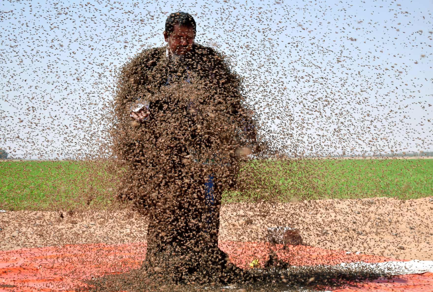 تصاویر روز: از حملهی هزاران زنبور به یک مرد عرب تا اعتراض مردم دهلی نو به افزایش بهای سوخت