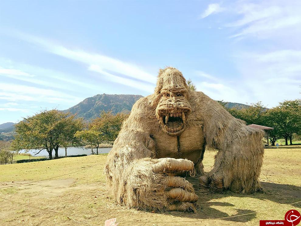 جشنواره کاه در ژاپن آغاز شد+تصاویر