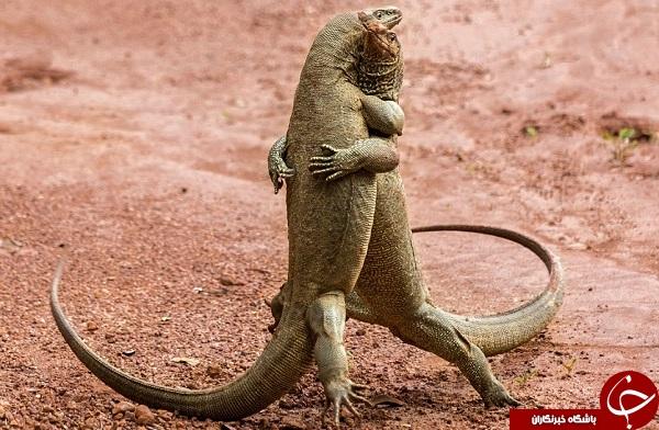 تصاویری زیبا از جشنواره حیاتوحش کمدی