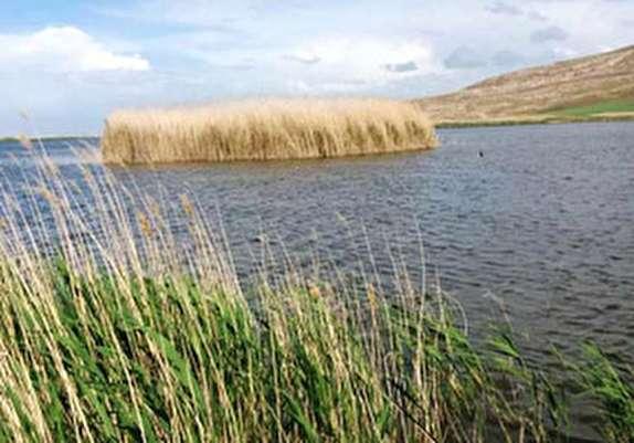 باشگاه خبرنگاران - کانی برازان سرزندهترین تالاب حوضه دریاچه ارومیه