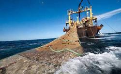مدیرکل زیستبومهای دریایی سازمان محیطزیست مطرح کرد؛ صید کشتیهای چینی، موجب نابودی مرجانهای دریای عمان میشود
