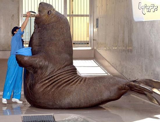 تصاویری از عظیم الجثه ترین حیوانات