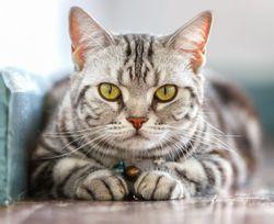 بیماری وحشتناکی که از گربه به صاحبش سرایت کرد! +تصاویر