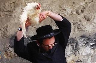 مرغی که از خجالت شهرکنشین صهیونیست درآمد +فیلم