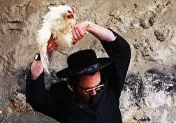 باشگاه خبرنگاران - رسم عجیب یهودیها در آستانه بزرگترین عید خود + فیلم