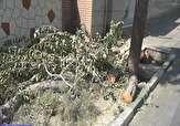 باشگاه خبرنگاران - قطع بیرحمانه درخت کهنسال در منطقه جردن + فیلم