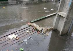 کانال ها و مسیرهای آب به صورت مستمر کنترل ولایه روبی می شوند