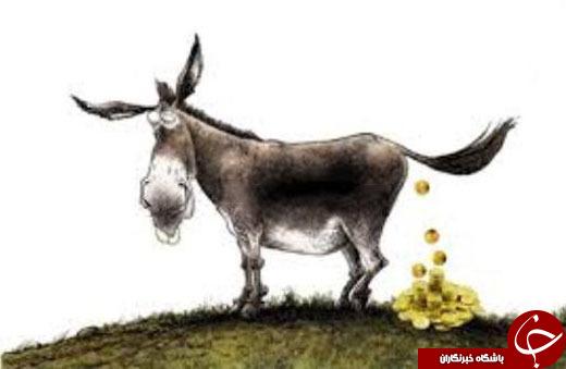 اسرار نهفته در سرگین الاغ ماده! / معرفی عنبر نسارا + خواص، نحوه مصرف و مراقبتهای لازم پس از استفاده از مدفوع الاغ