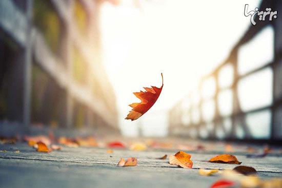 حقایق جالبی درباره عجیب ترین تغییراتی که در پاییز اتفاق می افتد!+ تصاویر