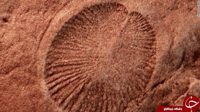 قدیمیترین جانور روی زمین شناسایی شد