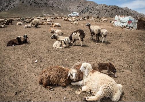 بیابانها و دشتهایی تهی از علوفه/ خشکسالی متهم ردیف اول