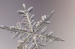 فردی که از دانههای برف عکس میگیرد + عکس و فیلم