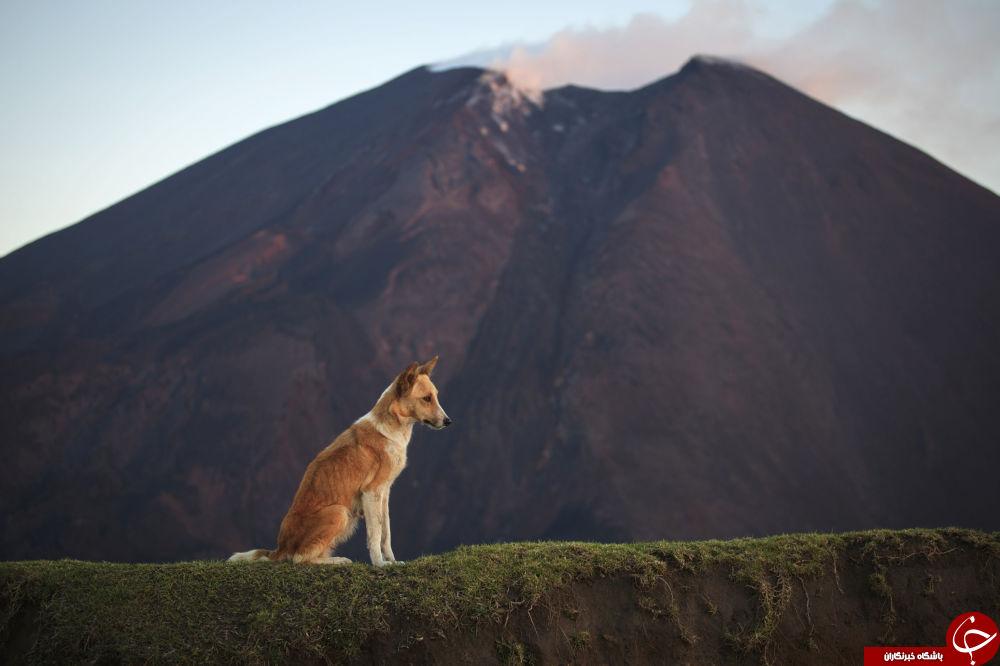 خطرناکترین گذرگاههای توریستی دنیا/ پایین را نگاه نکن!+تصاویر
