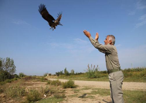 رهاسازی ۱۲ قطعه پرنده در طبیعت ساری +تصاویر