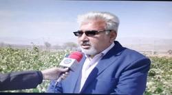 صادرات ۱۳ میلیون دلاری انگور قوچان