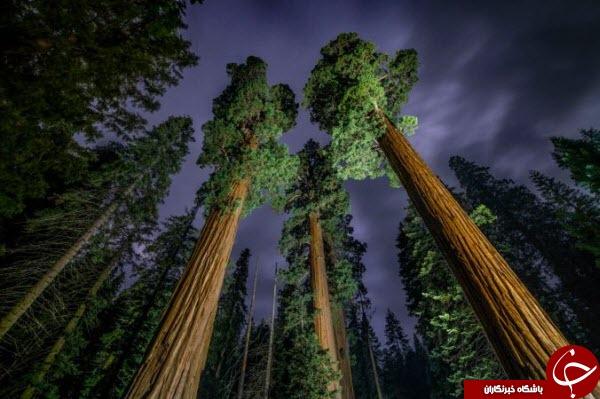 عکس روز نشنال جئوگرافیک از درختان عنکبوتی شکل در آسمان نوادا