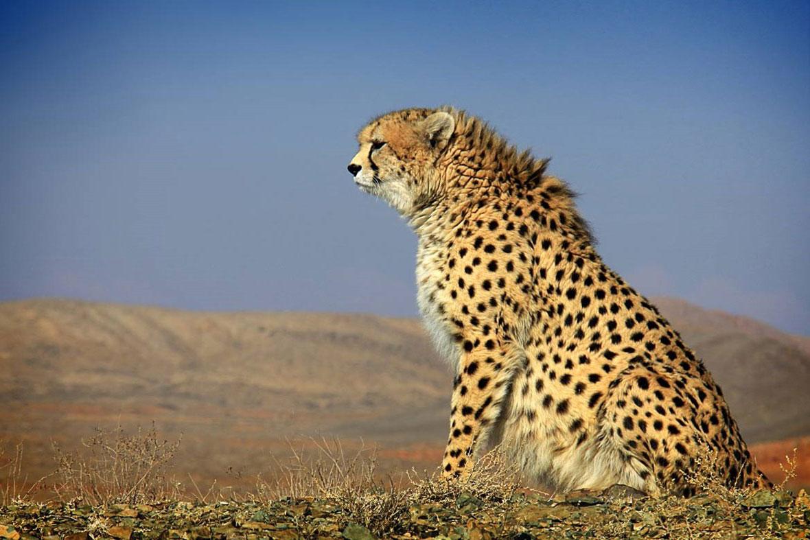انقراض در کمین گونههای جانوری/حیواناتی که در خطر نابودی قرار دارند را بشناسید