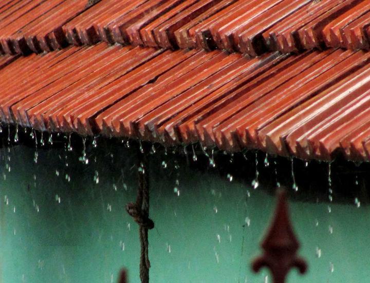 باران در قاب طبیعت+تصاویر