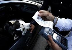 هشدار پلیس به دور دور بچه پولدارها با شیر و پلنگ + عکس