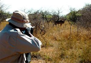 مجازات جالب  برای زنده گیر بره وحشی در فسا