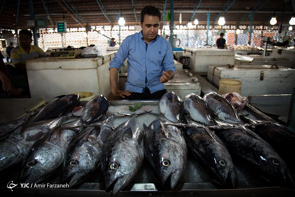 باشگاه خبرنگاران -ثبات نرخ ماهی در بازار