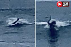 رویت یک جانور عجیب در چند قدمی ساحل! + فیلم