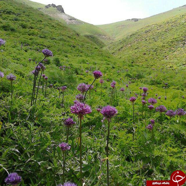 تصویرهایی از طبیعت دیدنی در روستای عربچه