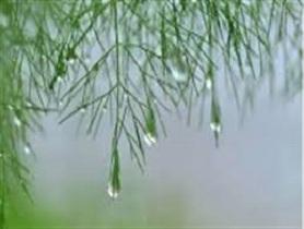 کرمان بارانی می شود