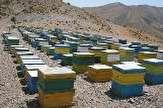 باشگاه خبرنگاران - اجرای طرح آمارگیری زنبور عسل در گیلان