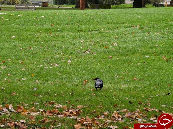 نمونه تصاویر گرفته شده با دوربین سهگانه هوآوی منتشر شد