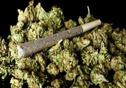 صفهای طولانی شهروندان کانادایی برای خرید قانونی ماریجوانا! + فیلم