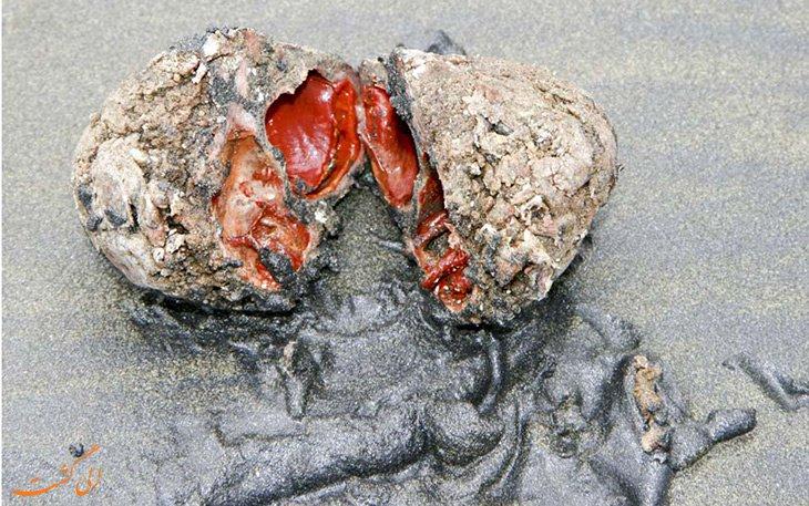 این سنگهای زنده را کباب کنید و بخورید!+ عکس