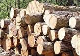 باشگاه خبرنگاران - کشف 8 تن چوب قاچاق در املش