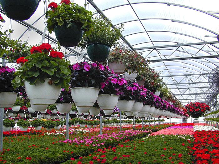 توسعه صادرات گل های زینتی، فرصتی برای ارزآوری/چرا بین تولید و صادرات گل، 100 رتبه فاصله وجود دارد؟!
