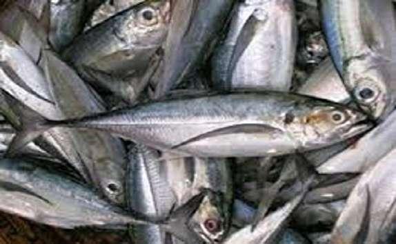 باشگاه خبرنگاران - صید ماهی از دریاچه سد شهید کاظمی  سقز آغاز شد