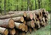 باشگاه خبرنگاران -کشف ۸۰ اصله چوب جنگلی قاچاق در ساری