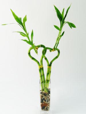 فیبر غذایی نامحلول جدا شده از شاخه های بامبو در پیشگیری چاقی