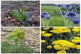 معاون فنی ادارهکل منابع طبیعی و آبخیزداری کهگیلویه و بویراحمد: شناسایی 200 هزار هکتار عرصه طبیعی مستعد توسعه گیاهان دارویی در کهگیلویه و بویراحمد